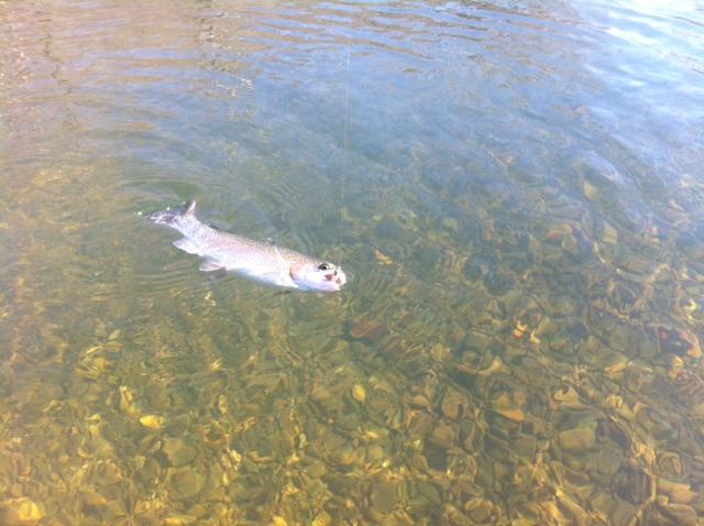 Fishing report 2 3 niangua river ozarkanglers com forum for Truman lake fishing report
