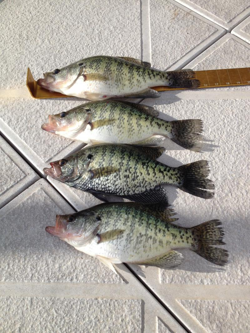 Past weekend crappie report w pics table rock lake for Table rock lake crappie fishing