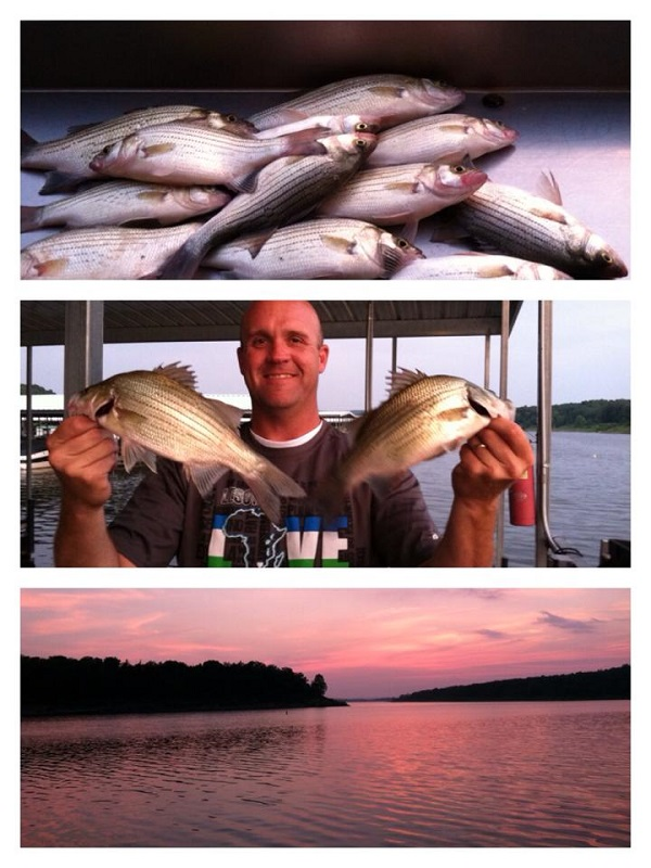 Whites truman lake ozarkanglers com forum for Truman lake fishing report