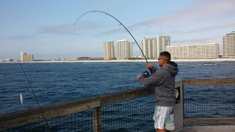 Black tip sharks navarre beach pier fl u s a south for Navarre pier fishing report