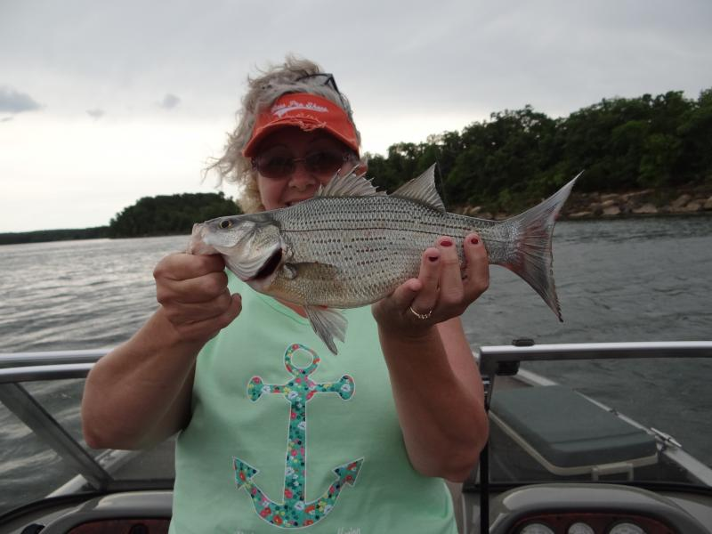 Walleye 5 30 16 memorial day stockton lake for Stockton fishing report
