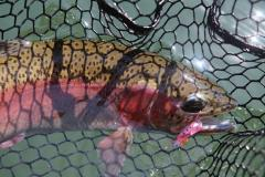Coldwater Fish Images